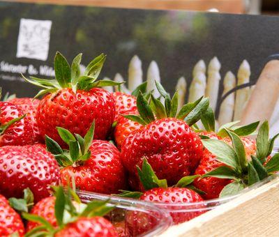 Erdbeeren und Spargel - regionales aus dem Emsland